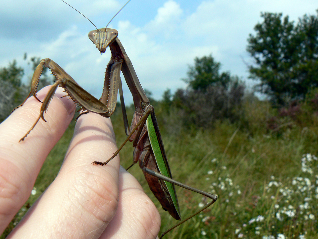 Eight Step Praying Mantis Workshop (Feb 6, 2016)